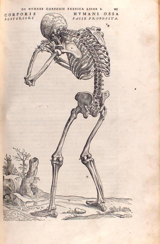 """Andreas Vesalius, """"De humani corporis fabrica"""", XVI wiek, za zbiorów PAN Biblioteki Gdańskiej"""